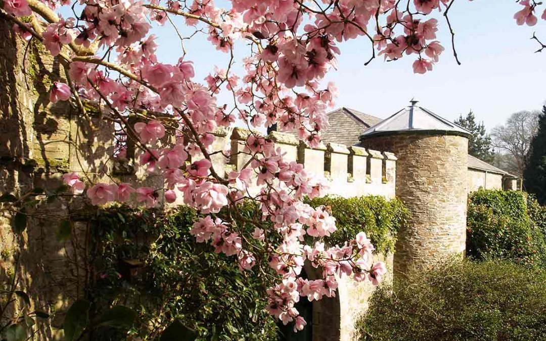 Unlimited Free Caerhays Castle Spring Garden Entry With Every Stay